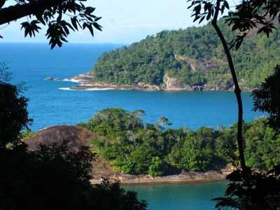 Isla Bosque