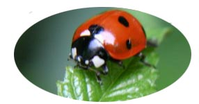Ladybug: Our Lady's Bug: A Symbol of Protection by Elaine Jordan